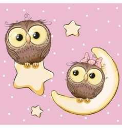 Lovers Owls vector image