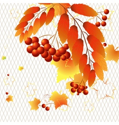 Autumn berries vector