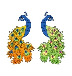 colored peacock on a white background vector image vector image