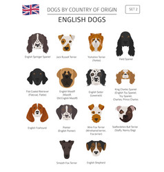 dogs by country of origin english dog breeds vector image