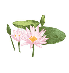 Hand drawn water lily flowers vector