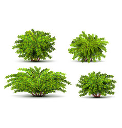 Shrubbery 3d isometric bushes isolated on white vector