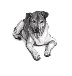 lying brown dog vector image vector image