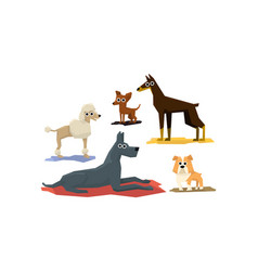 funny dogs different breads set cute pet vector image