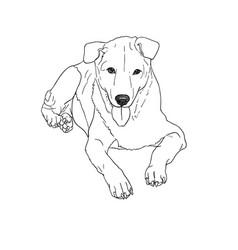 Lying brown dog vector
