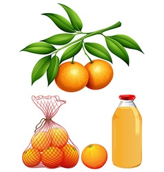 Set of fresh oranges and juice vector image vector image