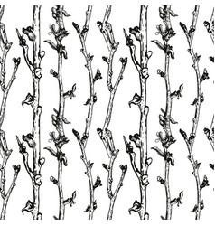 apple tree sketch vector image vector image