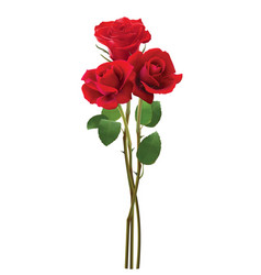 Bouquet of roses isolated on white realistic 3d vector