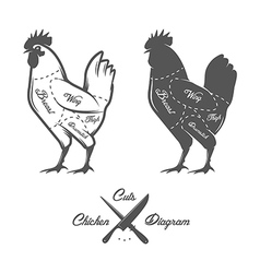 Chicken cuts diagram vector image