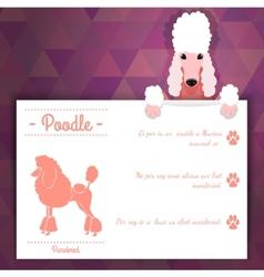 Poodle dog banner vector