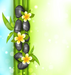 Spa therapy background with bamboo stones and vector image