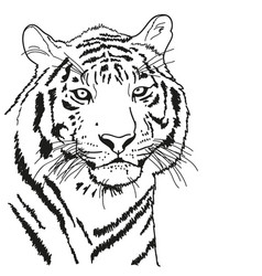 Tiger drawn with a black outline coloring vector