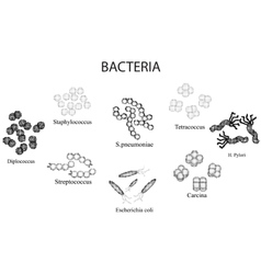 Set of bacteria Black and white Staphylococcus vector image vector image