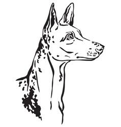 Decorative portrait ibizan hound dog vector