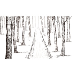 forest drawing vector image