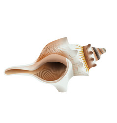 Isolated seashell vector