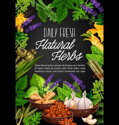natural herbs and organic spicy seasonings vector image