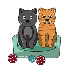two cats sitting in bed with balls toy vector image