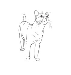 adorable cat curious staring something vector image vector image