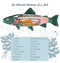 Fish internal organs art anatomy vector