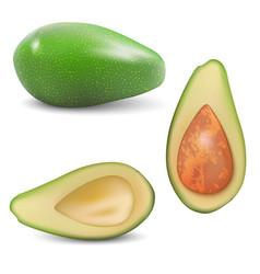 Fresh fruit avocado vector