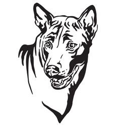Decorative portrait thai ridgeback dog vector