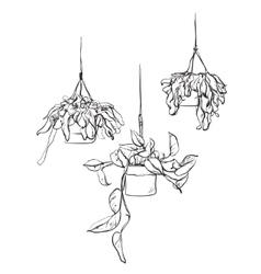 Pot plants set flowers in pots drawn black line vector image