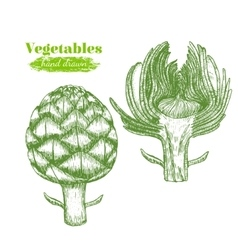 Artichoke Hand Draw Sketch vector image