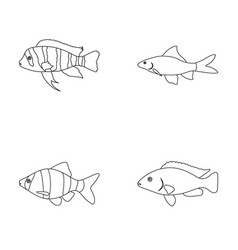 Botia clown piranha cichlid hummingbird guppy vector