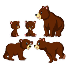collection of the bear and baby bear vector image