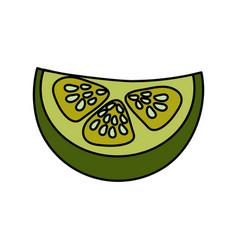 Fresh piece of cucumber organ vegetable vector