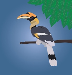 Great hornbill stand on the branch on blue vector image