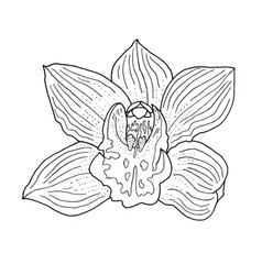 orchid hand drawn monochrome vector image