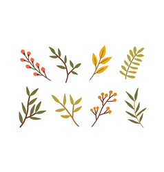 set different branches with leaves red berries vector image