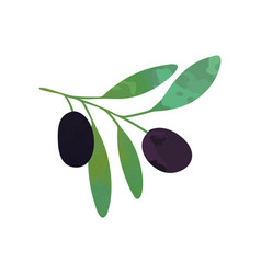 two black ripe olives on branch with green leaves vector image