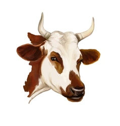 cow hand drawn painted vector image