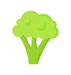 Broccoli healthy useful food vector