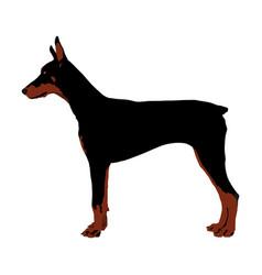 Doberman pincher dog isolated on white vector