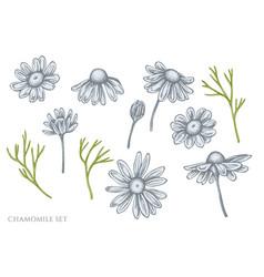 set hand drawn pastel chamomile vector image