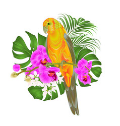 Sun conure parrot tropical bird standing on a vector