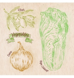 Vegetables onion napa cabbage olives country vector image vector image