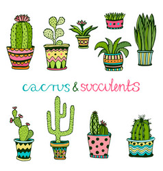 cactuse and succulent hand drawn set doodle vector image vector image