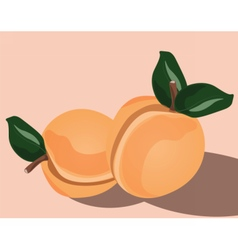 Fresh Peach fruit vector image