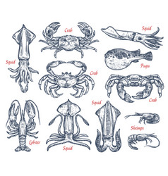 seafood animal sketch set of fish and crustacean vector image vector image