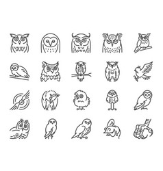 owl line icon set vector image