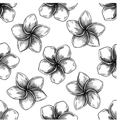 seamless pattern with black and white plumeria vector image