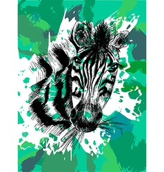 Zebra in eps vector