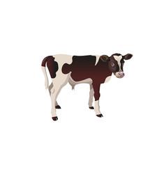 Calf cow vector