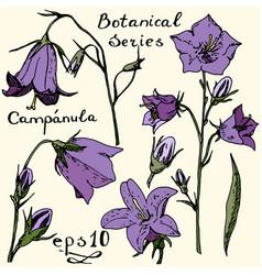 Campanula color botanic series vector