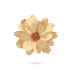 chrysanthemum flower floral vector image